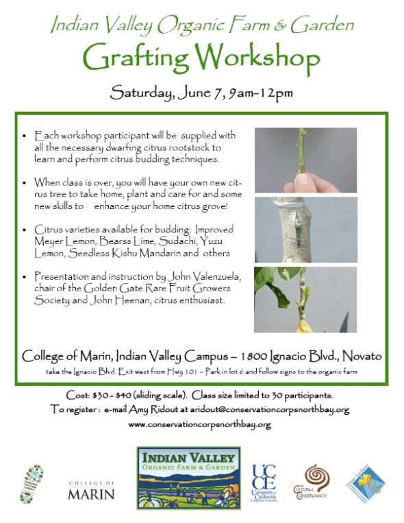 IVOFGcitrusgraftingworkshop2014