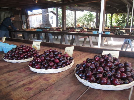cherry tasting before the crowds